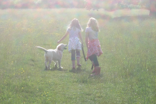 Is a dog the right pet for your family, pinkfizzandpoytails