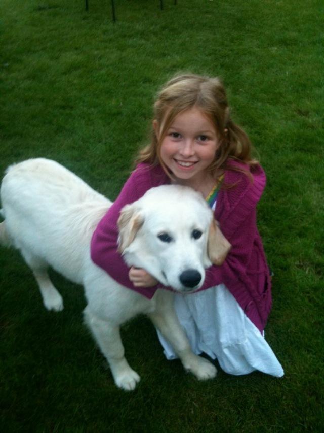 Why to get a dog, do breeds, golden retriever