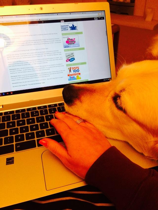 Dog on the blog